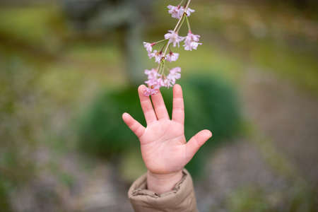 Child's hand trying to touch the flower