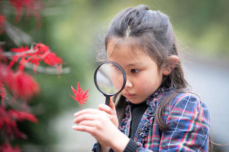 Girl looking at red leaves with a magnifying glass