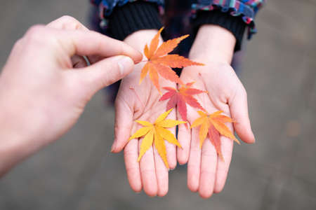 Parent and child hands playing with fallen leaves