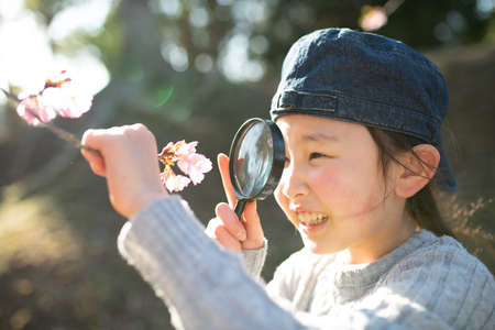 A child looking at cherry blossoms with a magnifying glass