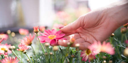 Female hand touching a pink flower