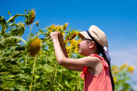 Girl playing in a sunflower field