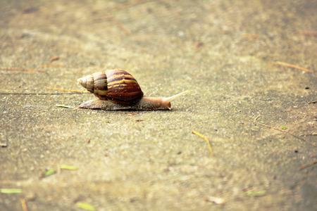 Snail across the street