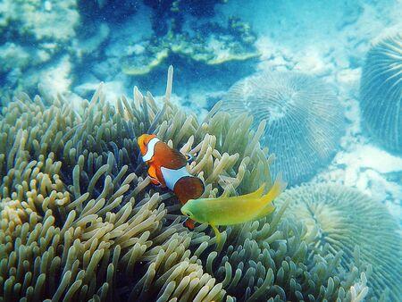 Cartoon fish and sea anemone