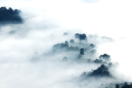 The fog almost guarded the forest Stock Photo
