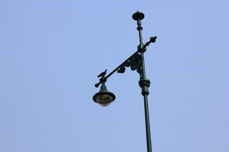 There are birds on a green lamp.