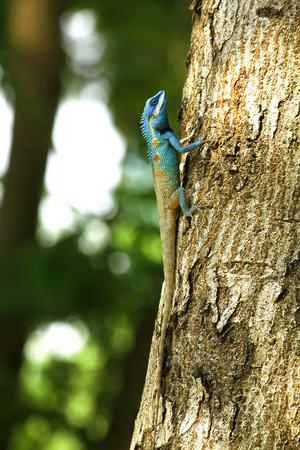 Blue lizard on a tree