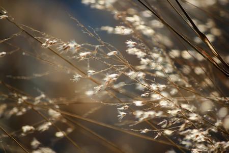 Grass tilting in the wind 免版税图像