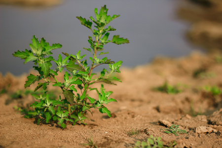 Green tree on dry soil Stock Photo