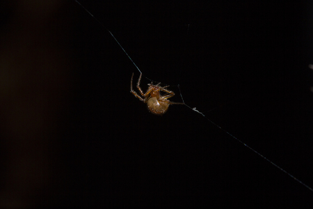 Brown spider climbing on a spider's fiber. Фото со стока