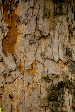 The bark of the tree with a jagged period.