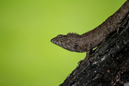 A lizard is climbing on a tree. Stock Photo