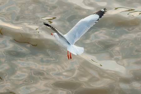 Seagulls are flying over the sea. Banque d'images - 120402894