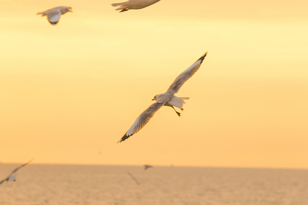 Seagulls are flying over the sea. Banque d'images - 120403675