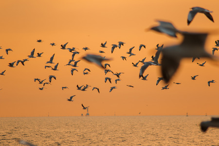 Silhouette of seagulls flying with the sunset