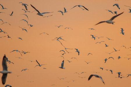 Silhouette of seagulls flying with the sunset Banque d'images