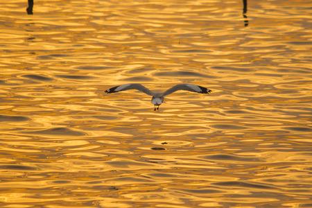 Seagulls are flying over the sea. 版權商用圖片 - 120404290