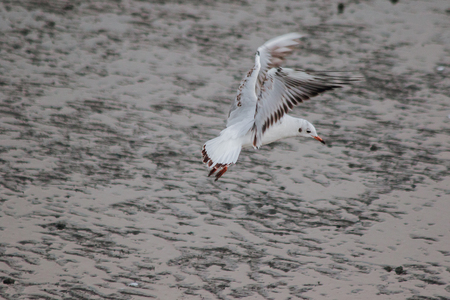 Seagulls are flying over the sea. 版權商用圖片 - 120404476