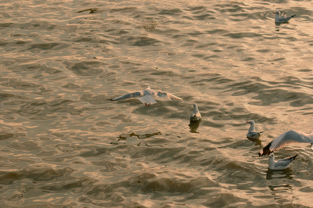 Seagulls are flying over the sea.
