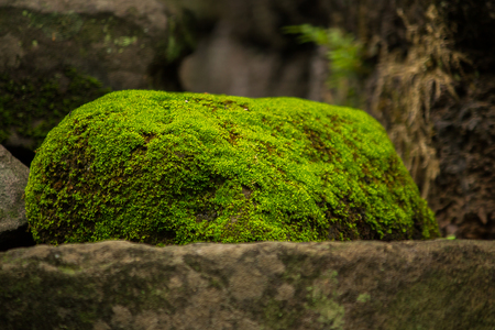 Moss on the bricks of the old castle Imagens