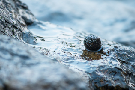 Shells on the rocks in the sea
