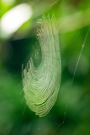 Spider webs in nature reflect sunlight