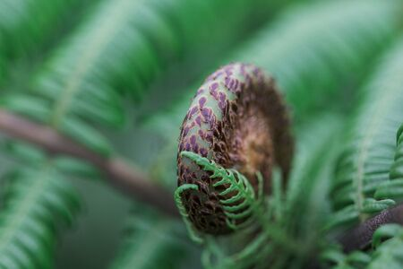 Close-up shots of green and black fern leaves curled. Stock fotó