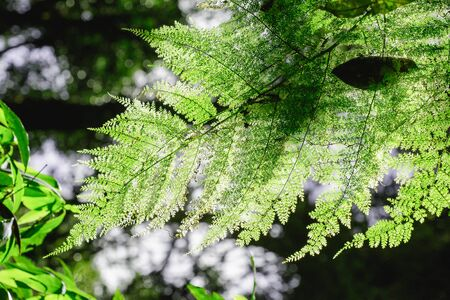 TFern leaves in the forest affect the morning sun.