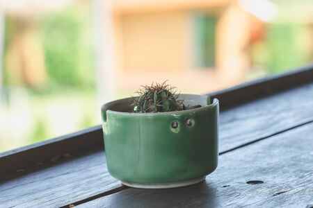 Cactus in pots placed on a wooden balcony