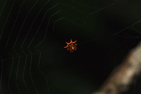 Orange spider on the web Is waiting for insects 版權商用圖片