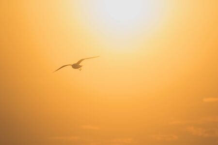 Silhouettes of seagulls flying in the sunset.Is a wetlands bird along the coast Foto de archivo