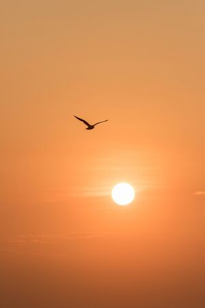 Silhouettes of seagulls flying in the sunset.Is a wetlands bird along the coast 写真素材
