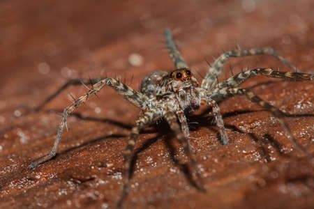 Spider, Lycosidae On the rock, Wolf spiders are members of the family Lycosidae.