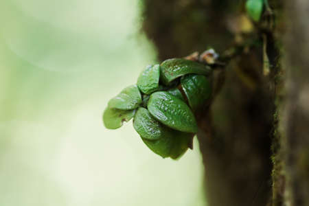 Leaves burst from the trunk to survive growing.
