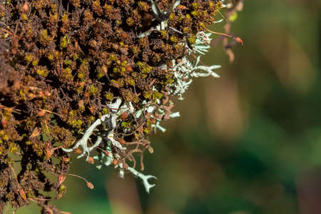 Lichens and mosses on trees in natural forests. It starts to dry out as you enter the summer.