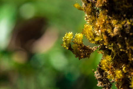 Green moss on the trees in the natural forest indicates moisture.