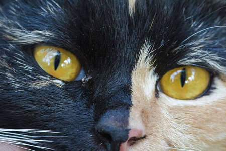 The cat has outstanding yellow eyes looking.