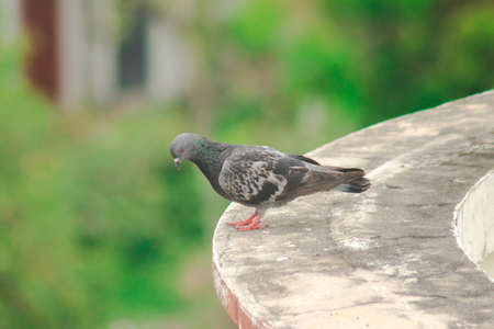 Pigeons on the roof , Pigeons are poultry that we can see everywhere. Reklamní fotografie