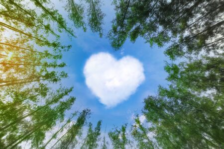 Heart shaped cloud over blue sky surrounded by pine trees. White cloud in the shape of hearts in the blue sky surrounded by pine trees. Reklamní fotografie