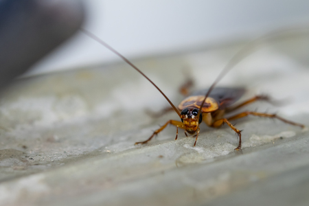 The cockroach crawling around faucet. 스톡 콘텐츠