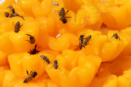 Photo of bees come to sweet for collecting syrup.