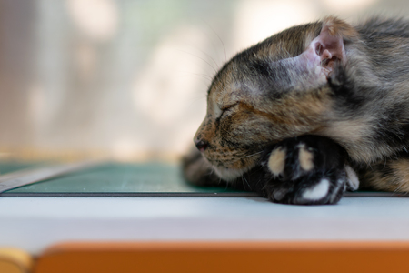 Photo of A sleeping kitten on the table