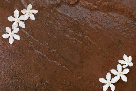 White flowers drop on wet stone background. Stok Fotoğraf