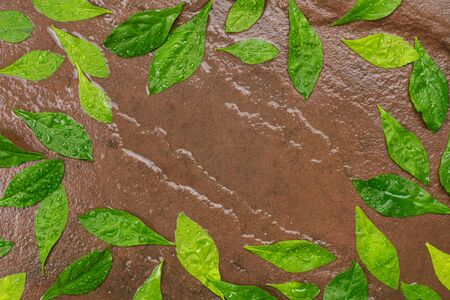 Green leaves drop on wet stone background.