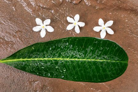 White flowers and a green leaf drop on wet stone background