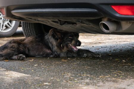 The black dog hide it self under a car from the sunlight in the sunny season, it is very hot 写真素材