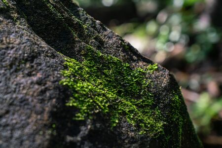 Green moss on the stone surface in the rain forest