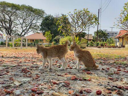 Two kittens strolling in the backyard