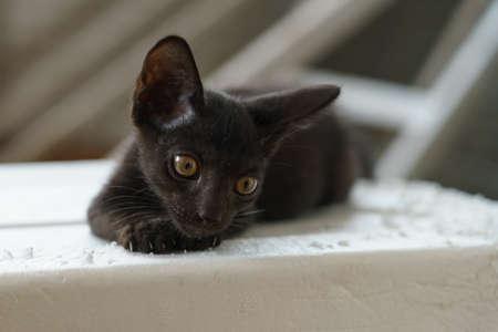 A male black kitten lying on a foam box