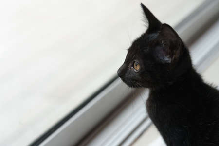 The male black kitten sat looking out of the glass door.